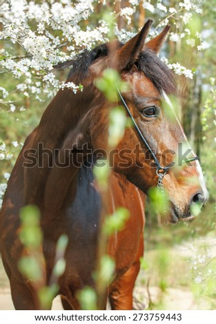 Beautiful bay mare posing near the blooming tree.