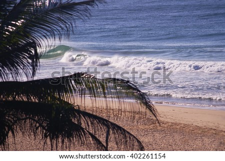 Beautiful beach with blue water and palm in Sri Lanka. Ocean waves in Sri Lanka
