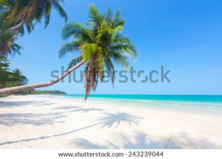 beautiful beach with coconut palm - stock photo
