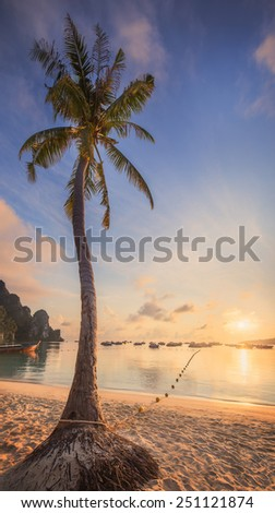 beautiful beach with coconut palm tree  on white sand with ocean view