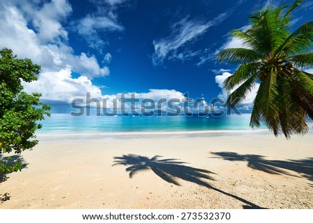 Beautiful beach with palm tree at Seychelles, Mahe