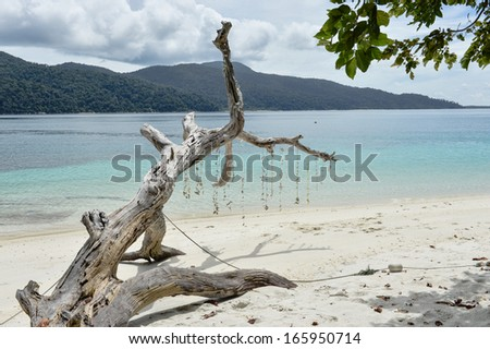 Beautiful beach with white dead trees - stock photo