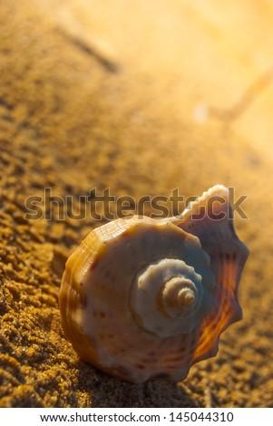 beautiful big seashell on sandy beach in cool shade - stock photo