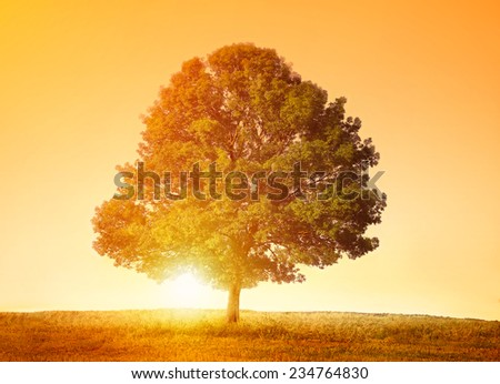 Beautiful Big Tree stand alone in field - stock photo