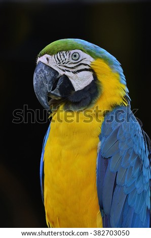 Beautiful bird Blue and Gold Macaw