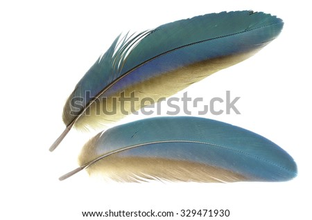 Beautiful bird feathers, Beautiful macaw feathers, Blue and Gold macaw Fathers.