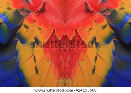 Beautiful bird feathers, Scarlet Macaw feathers pattern background - stock photo