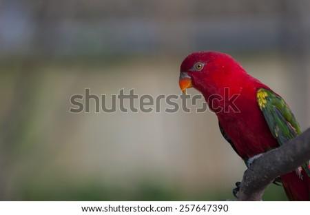 Beautiful bird in the zoo - stock photo