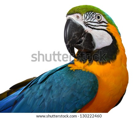 Beautiful Bird. Isolated Macaw. Parrot