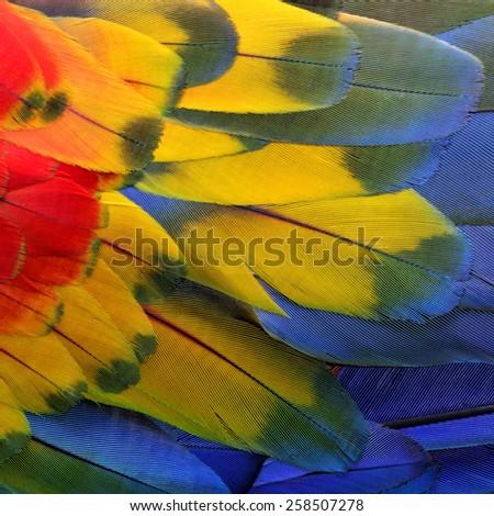Beautiful bird Scarlet Macaw feathers. - stock photo