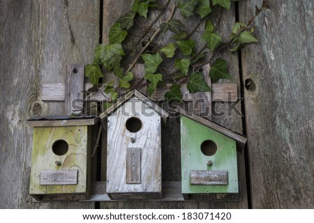 Beautiful birdhouses with English Ivy on old wooden fence - stock photo