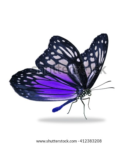 Beautiful black and purple butterfly isolated on white background - stock photo