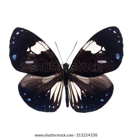 Beautiful Black and white butterfly isolated on white background. - stock photo