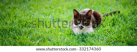 Beautiful black-and-white cat in city's green summer garden. - stock photo