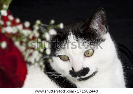 Beautiful black and white cat posing with red flowers