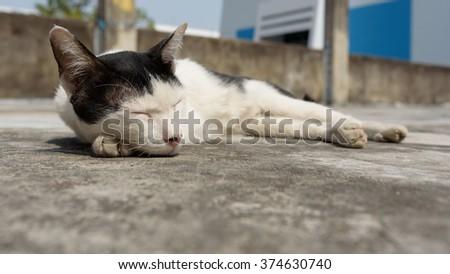 Beautiful black and white cat sleeping , close up - stock photo