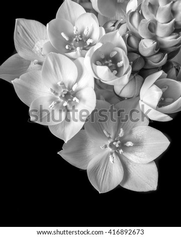 beautiful black and white flowers