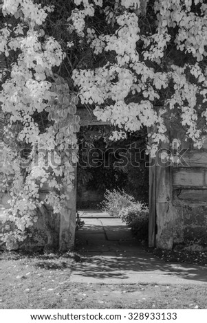 Beautiful black and white landscape of plants covering doorway into garden of old ruined house