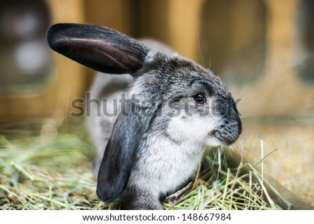 beautiful black-and-white rabbit in the hay - stock photo