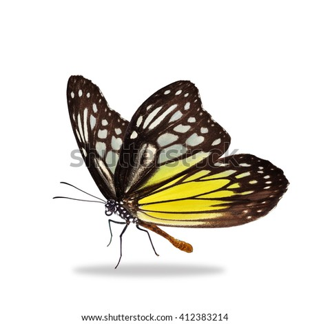 Beautiful black and yellow butterfly isolated on white background - stock photo