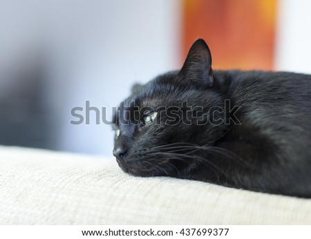 Beautiful black cat with green eyes lying on a sofa