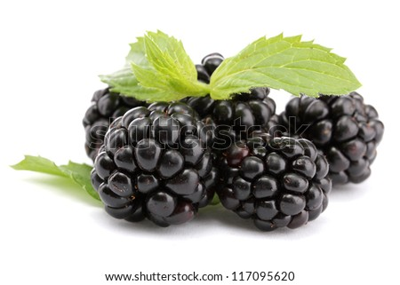 beautiful blackberries with leaf isolated on white - stock photo
