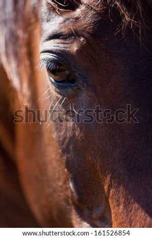 beautiful blond cruzado horse outside horse ranch nature
