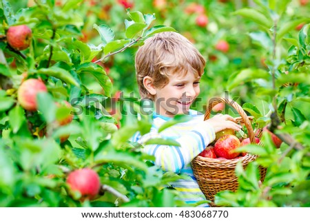 Beautiful blond happy kid boy picking and eating red apples on organic farm, autumn outdoors. Funny little preschool child having fun with helping and harvesting