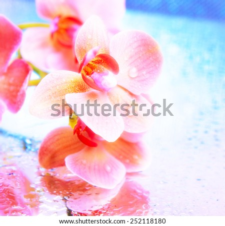 Beautiful blooming orchid close-up - stock photo