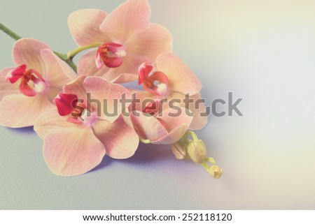 Beautiful blooming orchid on light color background - stock photo