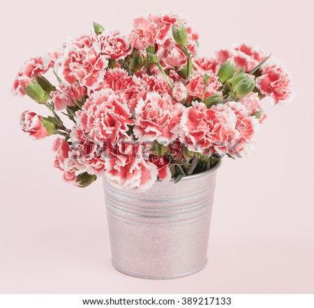 Beautiful blooming pink carnations on a pink pastel background.