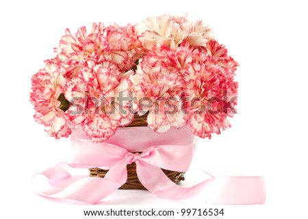 Beautiful blooming pink carnations on a white background - stock photo