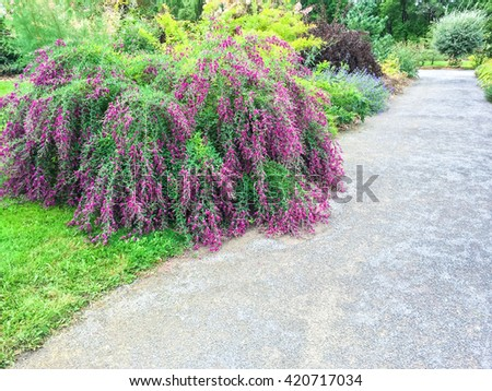 Beautiful blooming plants in a summer garden with pathway. - stock photo