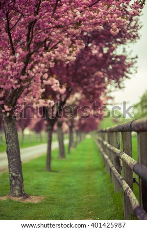 Beautiful blooming spring landscape