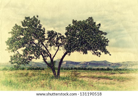 Beautiful blooming tree in the Cappadocia mountains. Retro style photo. - stock photo