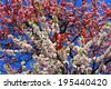 Beautiful blossoming japanese cherry trees in close up - stock photo