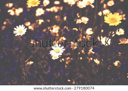 Beautiful blossoming meadow with daisy and bell flowers. Selective focus. Blurred toned photo. - stock photo