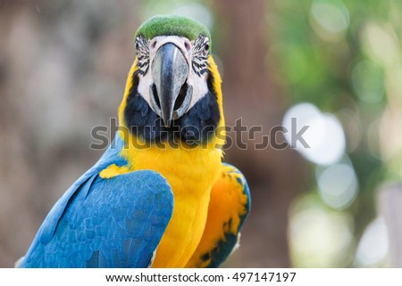 Beautiful Blue and gold macaw bird - Tropical parrot