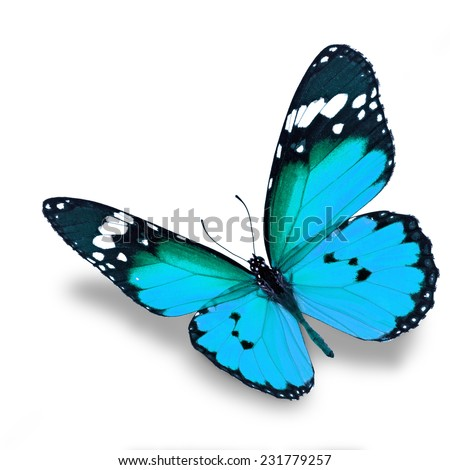 Beautiful blue butterfly flying isolated on white background