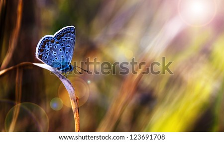 Beautiful blue butterfly in sunset - stock photo