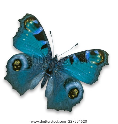 Beautiful Blue butterfly isolated on white background. - stock photo