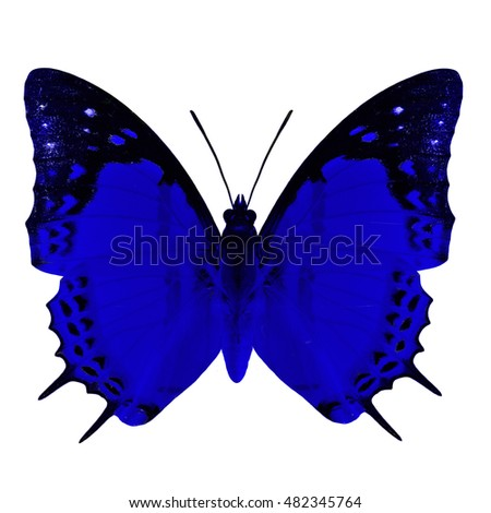 Beautiful blue butterfly, Shan Nawab (Polyura nepenthes) in fancy color profile isolated on white background, exotic nature