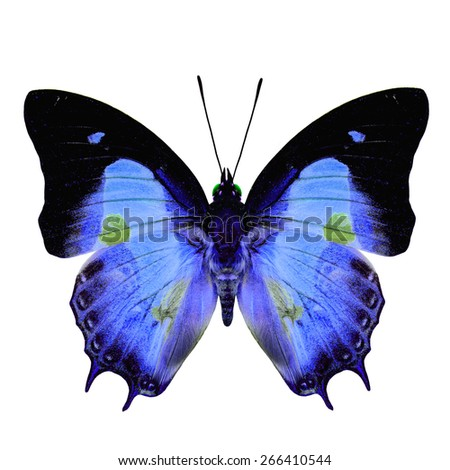 Beautiful blue butterfly with green spots on wings isolated on white background, soft focus