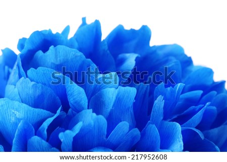Beautiful blue flower close-up - stock photo