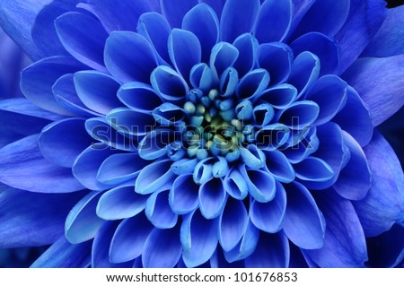 Beautiful blue flower image for zen nature background or nature wallpaper