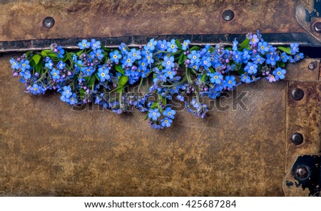 Beautiful blue flowers in an old shabby suitcase. Forget-me-not  on vintage leather background. Summer time. - stock photo