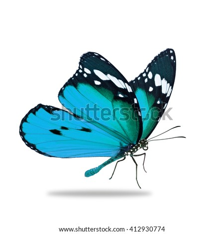 Beautiful blue monarch butterfly isolated on white background - stock photo