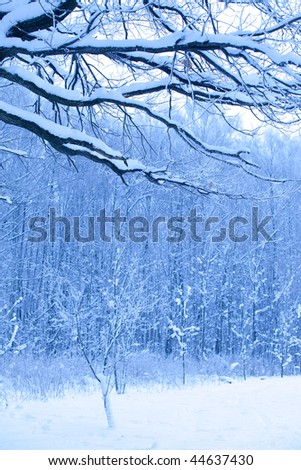 beautiful blue morning in snow wood - stock photo