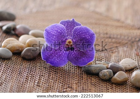 beautiful blue orchid with stones on mat