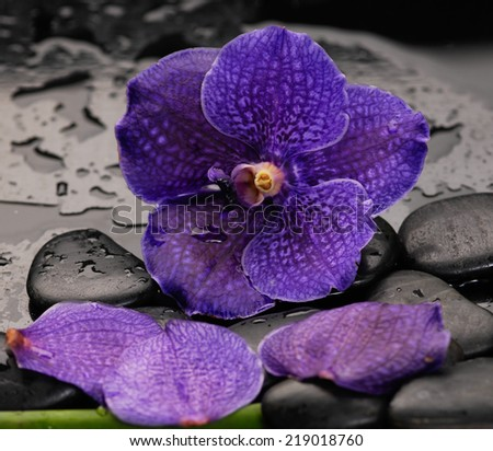 beautiful blue orchid with therapy stones